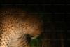 CRay-Africa16-2184