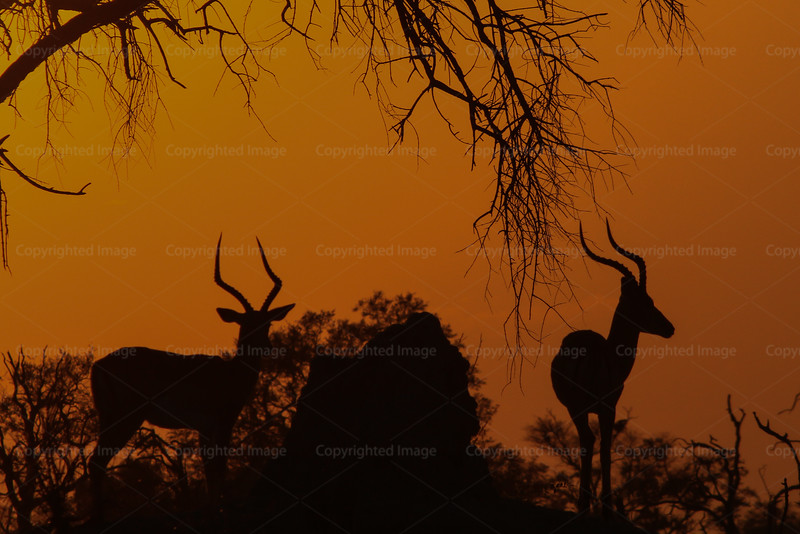 CRay-Africa16-2158