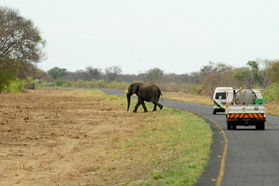 Not sure why the elephant crossed the road...