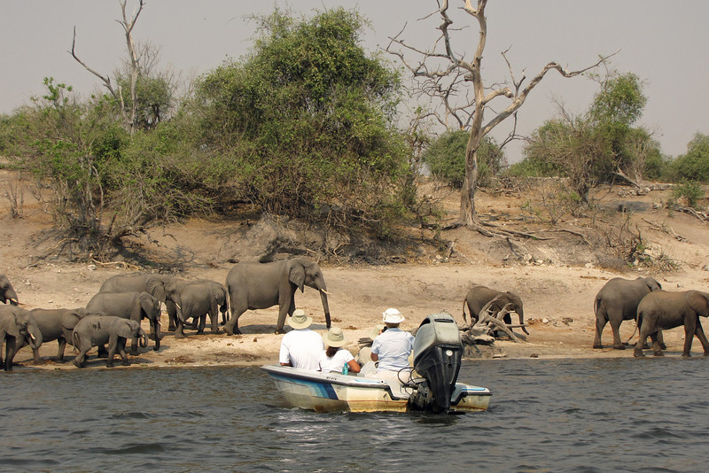 A new kind of game drive; we saw much more from the river than we would have on land.