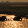 Elephants crossing the Chobe