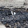 Seagulls, Luderitz, Namibia