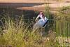 Marabou Stork  @ Rattray's ~ Mala Mala, Sabi Sand Private Reserve, ZA