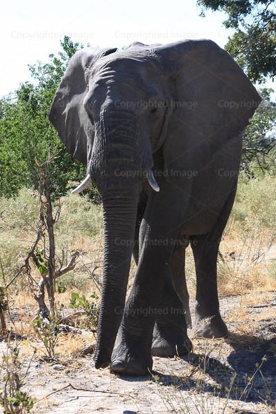 CRay-Africa16-8656