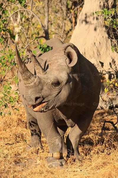 CRay-Africa16-3074