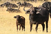 CRay-Africa16-3890