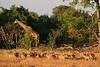 CRay-Africa16-3130