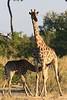 CRay-Africa16-3094