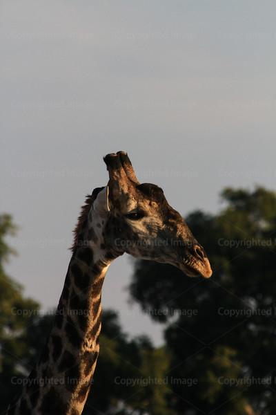 CRay-Africa16-3124