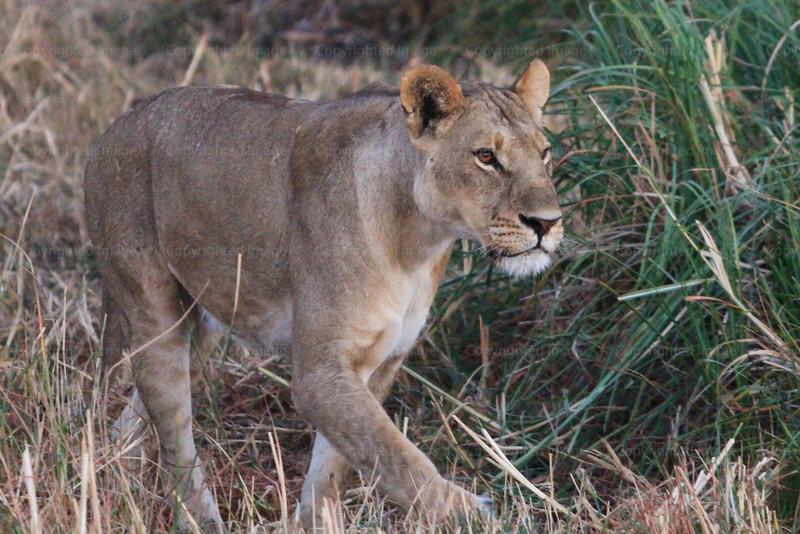 CRay-Africa16-2256