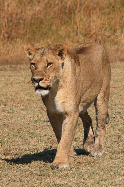 CRay-Africa16-2670