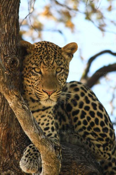 CRay-Africa16-2708