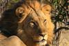 CRay-Africa16-2995