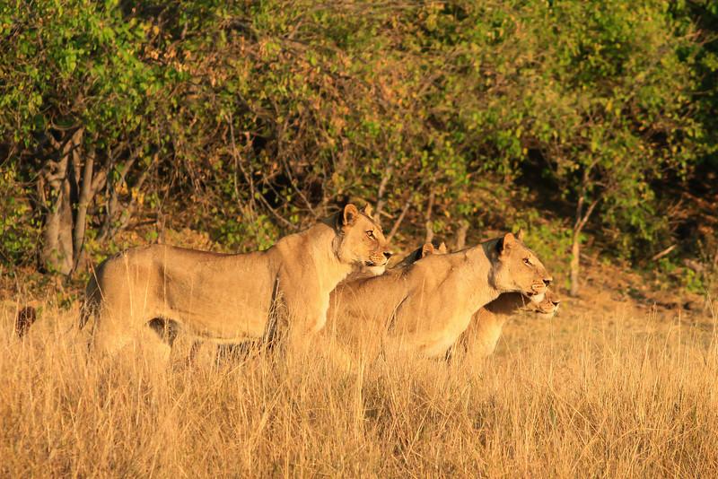 CRay-Africa16-1858