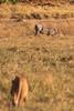 CRay-Africa16-1860