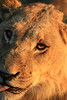 CRay-Africa16-2373