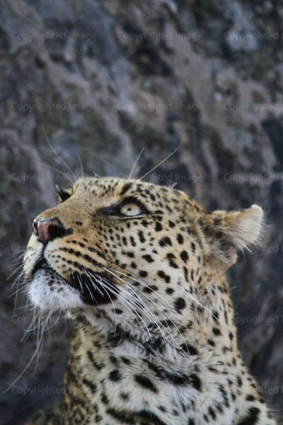 CRay-Africa16-2908