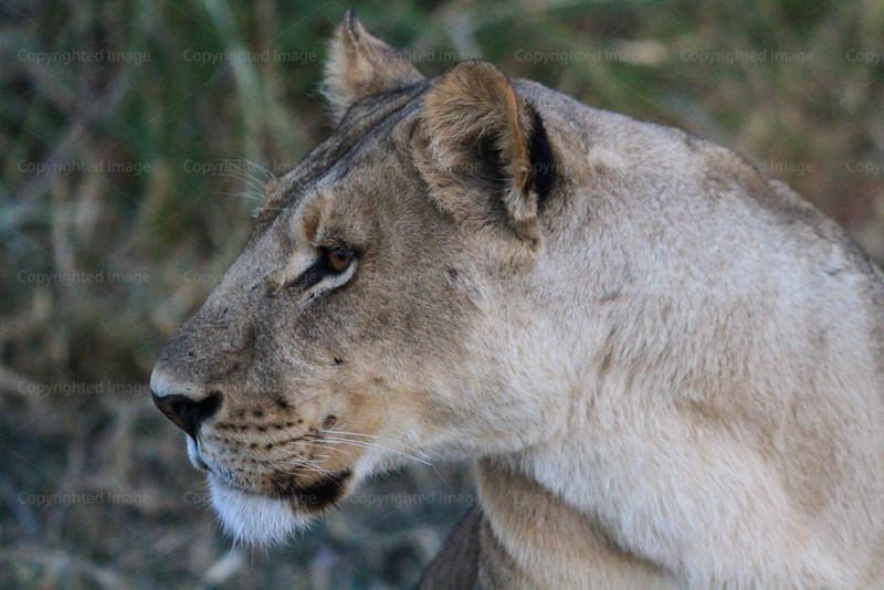 CRay-Africa16-2286