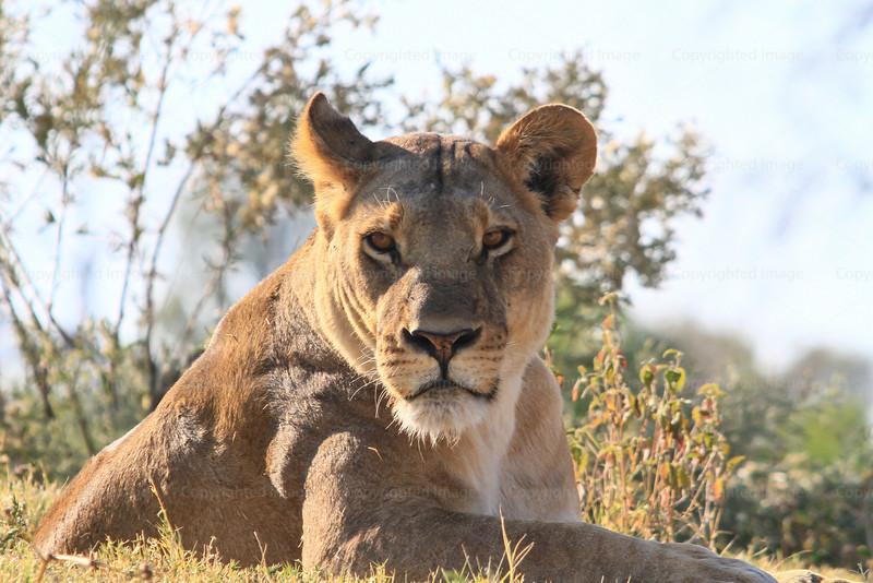 CRay-Africa16-2468