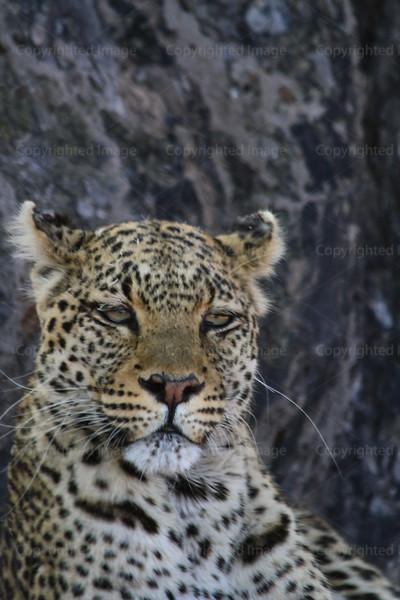 CRay-Africa16-2910
