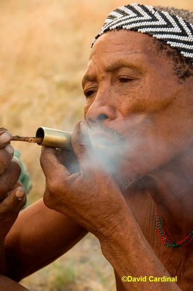 Bushman Elder
