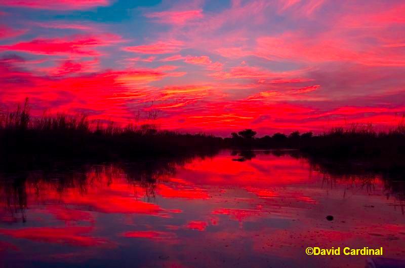 Early Light in the Okavango