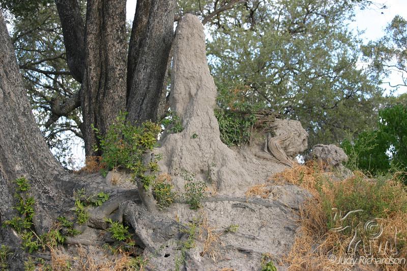 Magnificant Termite Mound