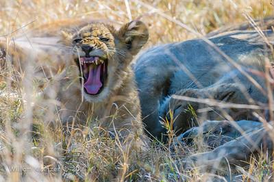 Botswana (Moremi Game Reserve)