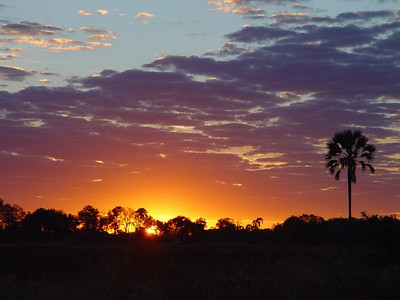A beautiful sunrise in the bush.