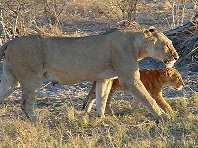 A closer look at mum and cub.