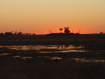 A gorgeous sunset along the Savuti Channel graced our first sundowners in the Linyanti Reserve.