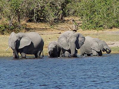 More playful elephants.