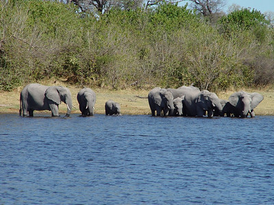 This is what I had been wanting to see throughout our safari - a herd of ellies at the edge of a body of water.