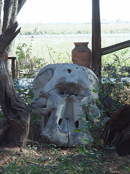 The only elephant skull we came across in the bush was this one at the entrance to the camp.