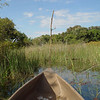 That is no idle stick in front of the mokoro; it caught spiderwebs as we poled through the reed-lined water channels.