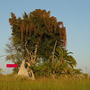 Termite mounds dotted the bush landscape.