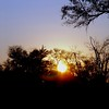 We enjoyed our first bush sunset while sipping drinks on a small island in the Okavango Delta.