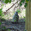 No peeping toms at Xigera; just peeping baboons that browsed in the bushes near our outside shower.