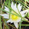 The water in front of the camp was blanketed with lilies.