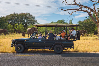 Herd of elephants in front of a safari car with tourists in Chobe National Park