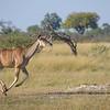 Kudu Run