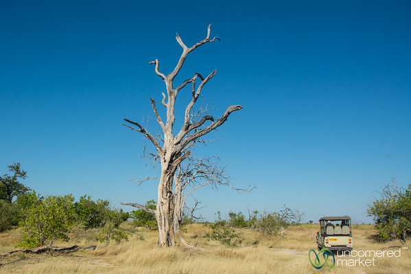 Safari Roads, Moremi Game Reserve - Botswana