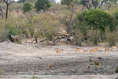 Kudu, Impala, Baboons