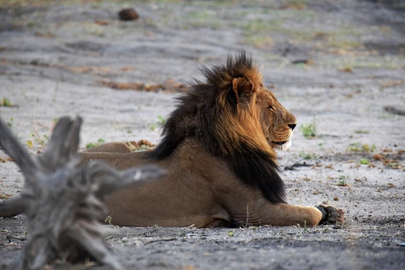 The King looking at his royal family