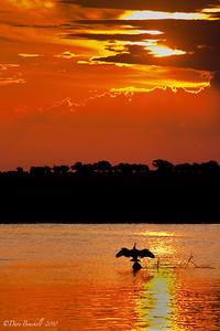 Chobe National Park Sunset in Africa