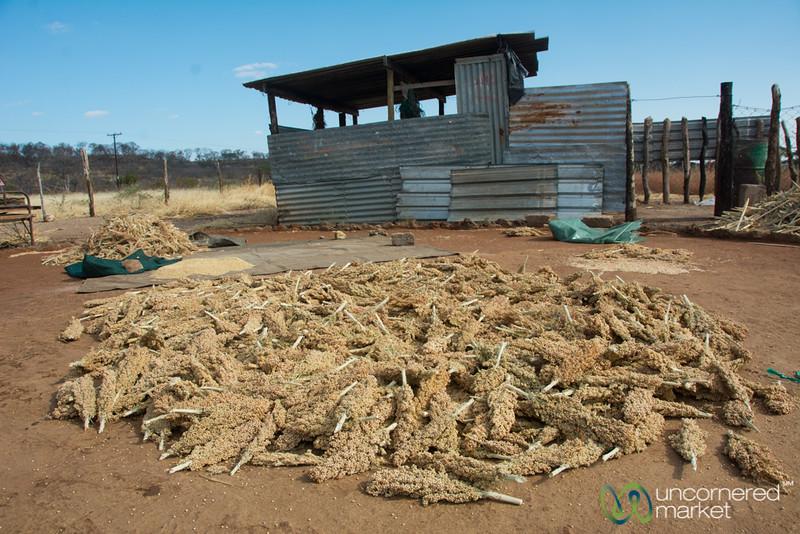 Sorghum Farm  - Chobe Enklave, Botswana
