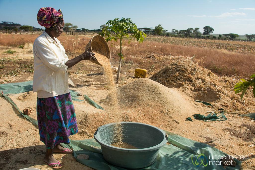 Sorghum Farm Stop - Chobe Enklave, Botswana