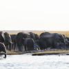 Elephants on Sedudu Island