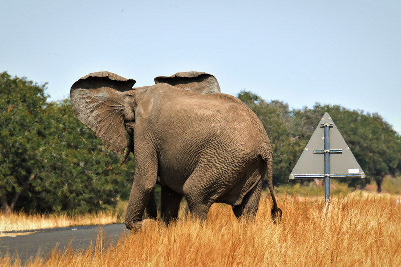 Look Right when you cross the road in Botswana...
