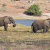 Elephants grazing by the Chobe river